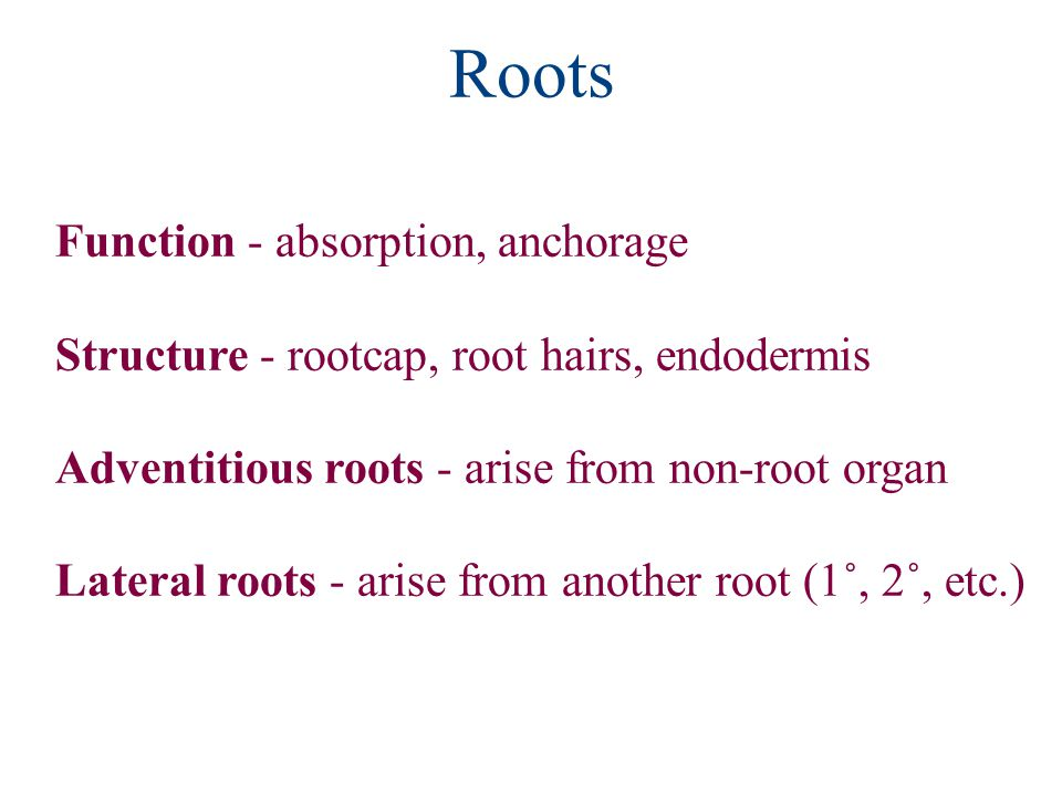 Roots Function - absorption, anchorage