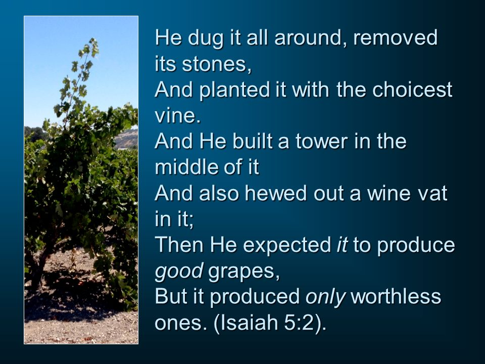 He dug it all around, removed its stones, And planted it with the choicest vine.
