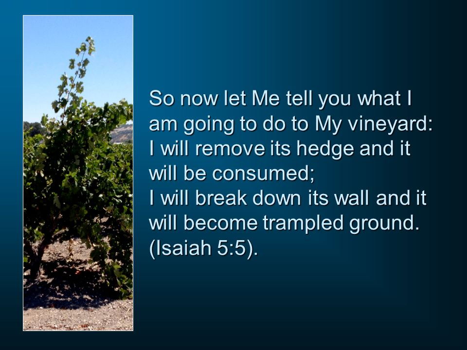 So now let Me tell you what I am going to do to My vineyard: I will remove its hedge and it will be consumed; I will break down its wall and it will become trampled ground.