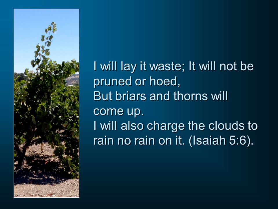 I will lay it waste; It will not be pruned or hoed, But briars and thorns will come up.