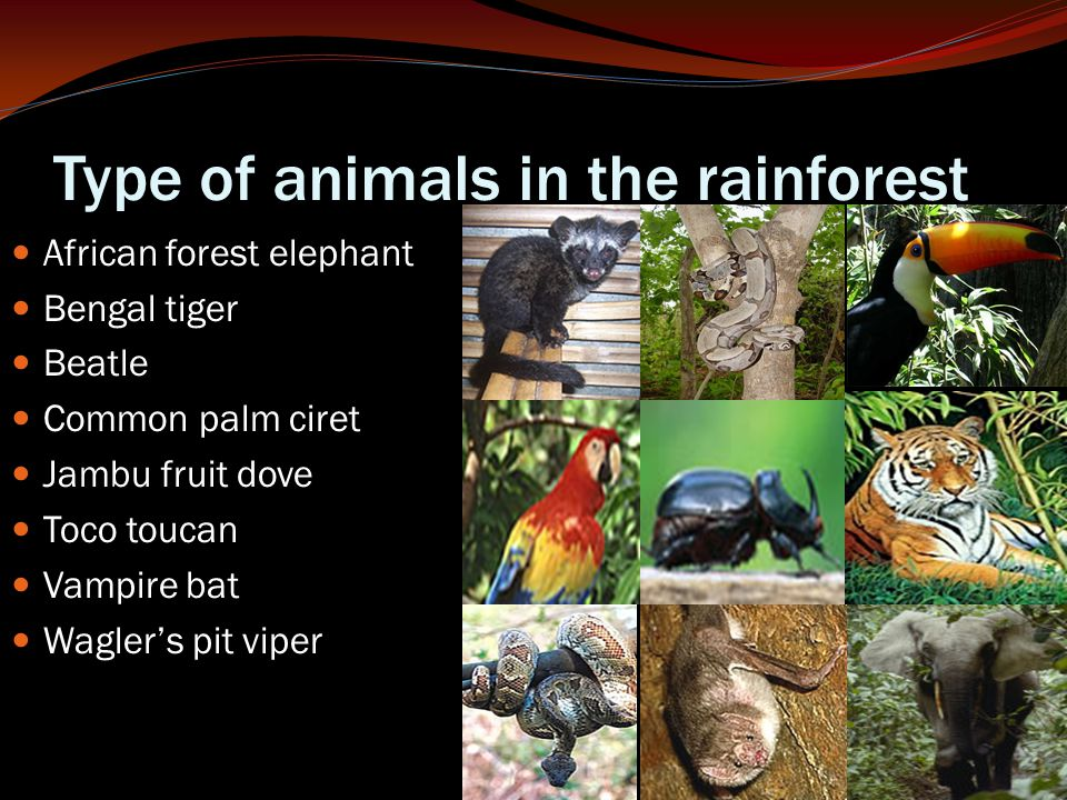 Type of animals in the rainforest