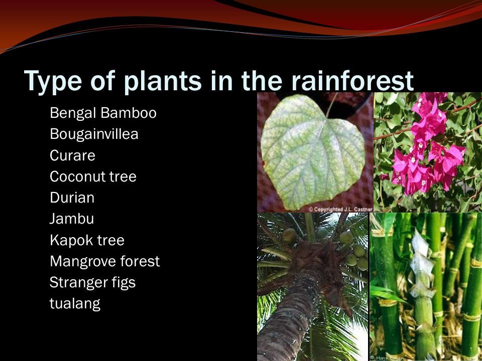 Type of plants in the rainforest