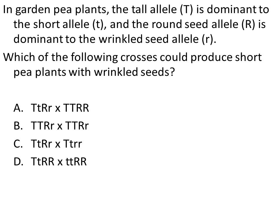 In garden pea plants, the tall allele (T) is dominant to the short allele (t), and the round seed allele (R) is dominant to the wrinkled seed allele (r).