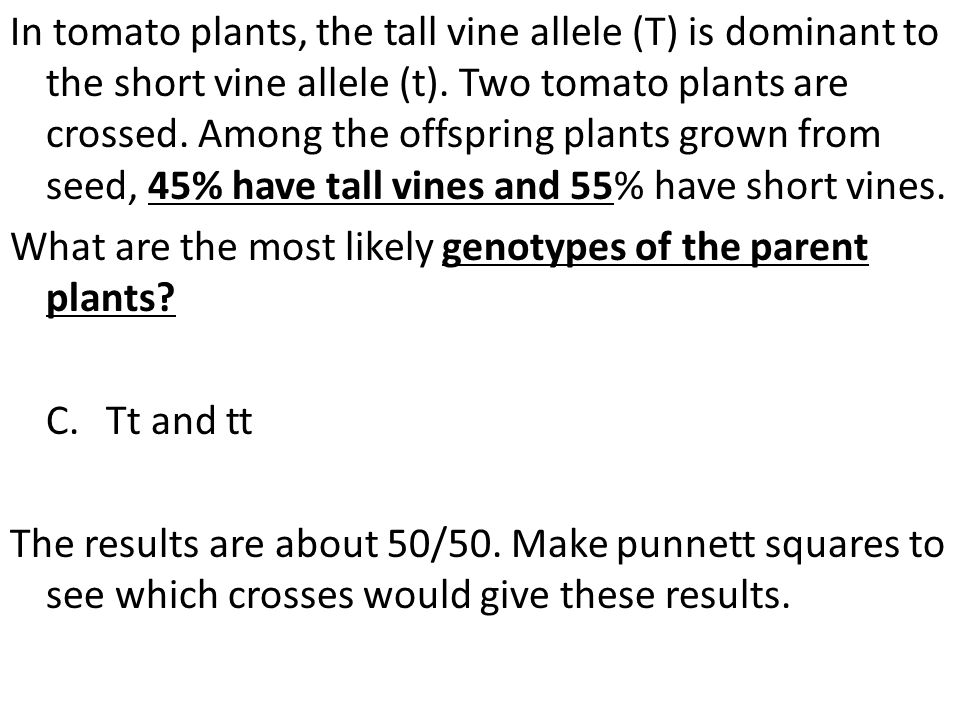 In tomato plants, the tall vine allele (T) is dominant to the short vine allele (t).