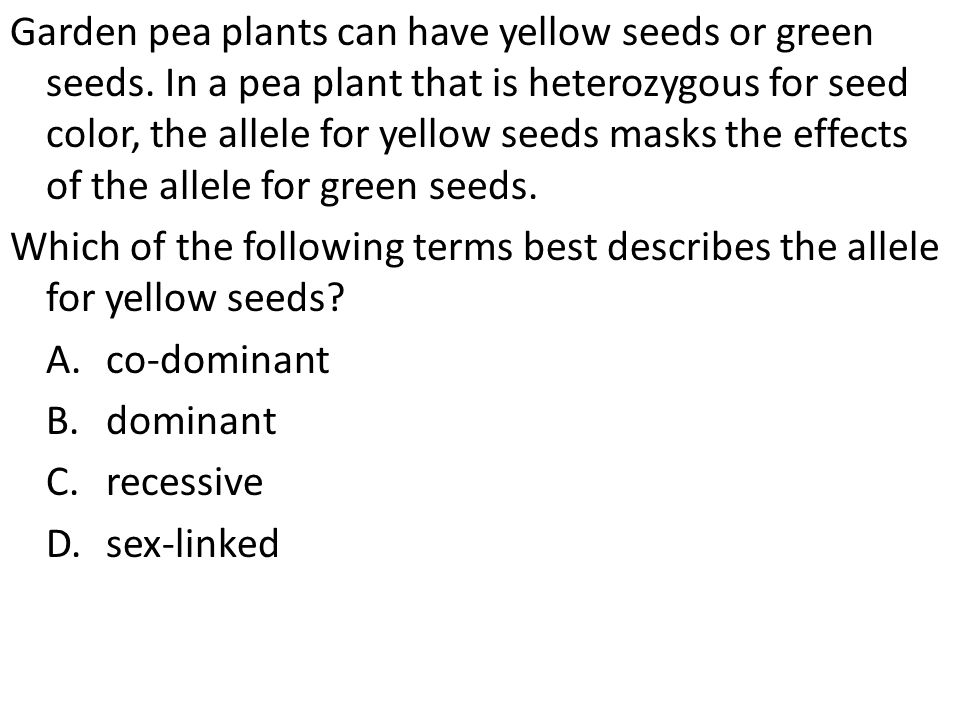 Garden pea plants can have yellow seeds or green seeds