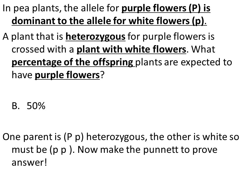 In pea plants, the allele for purple flowers (P) is dominant to the allele for white flowers (p).