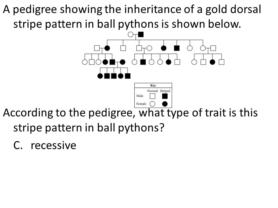 A pedigree showing the inheritance of a gold dorsal stripe pattern in ball pythons is shown below.