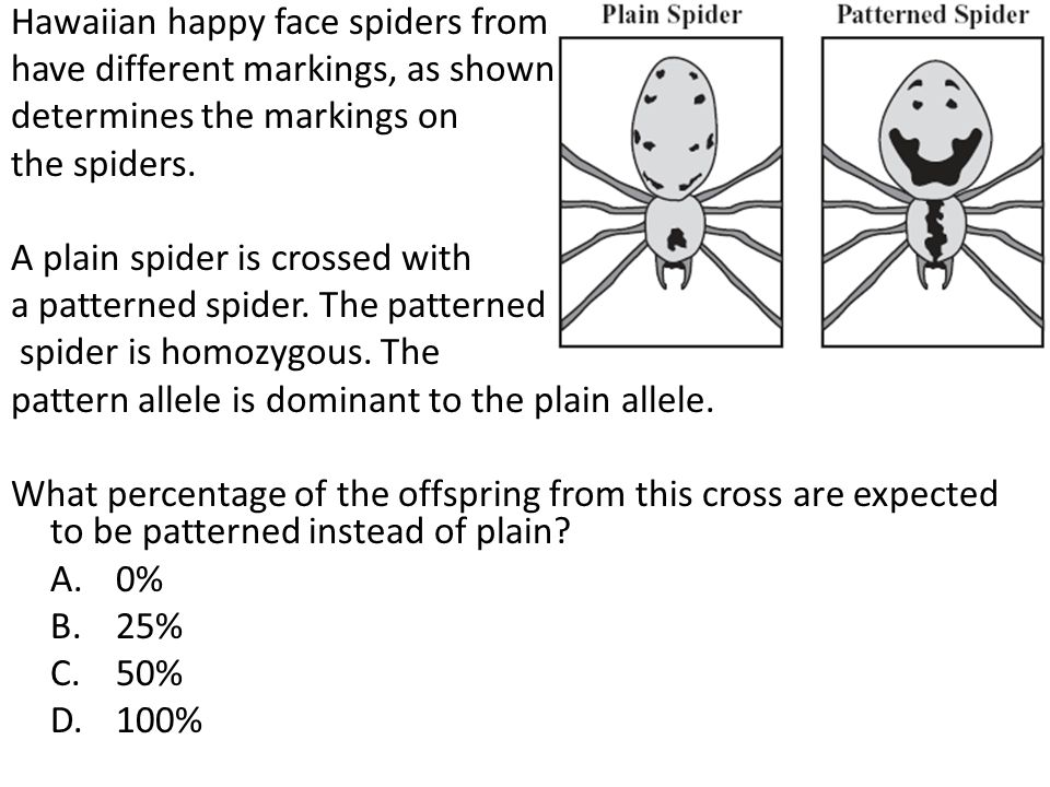 Hawaiian happy face spiders from the island of Maui can