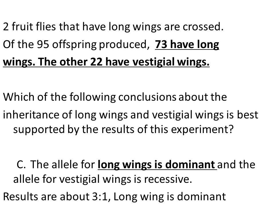 2 fruit flies that have long wings are crossed.
