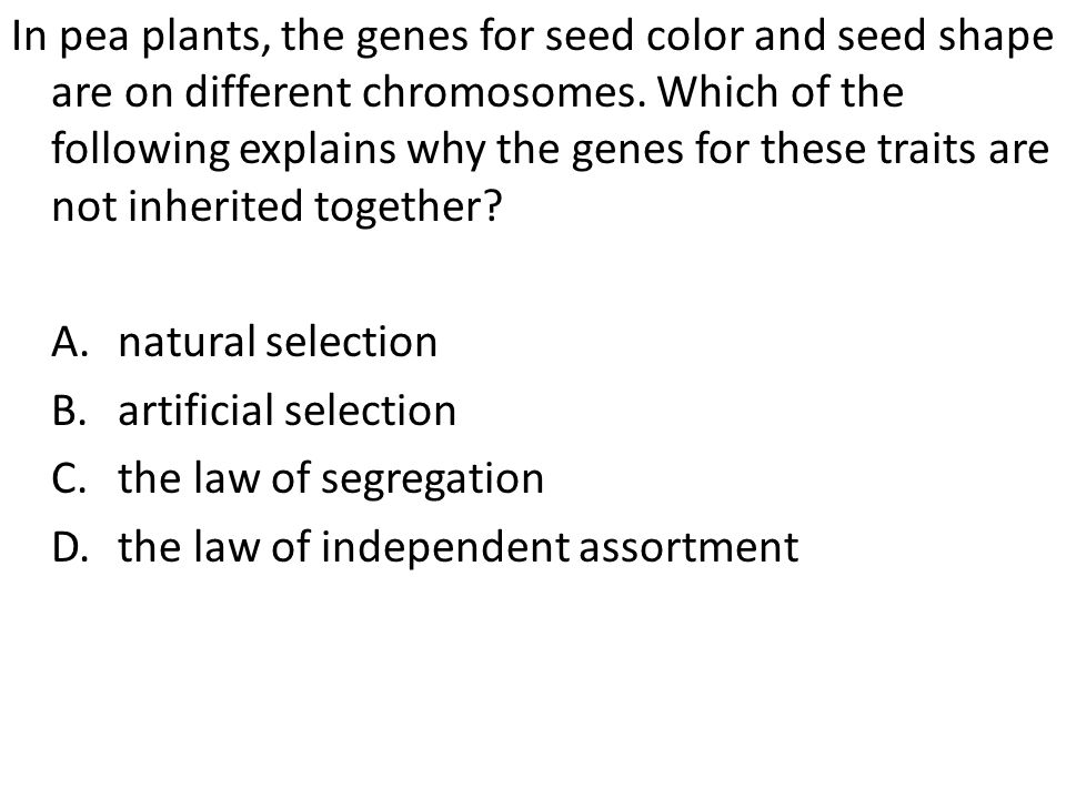 In pea plants, the genes for seed color and seed shape are on different chromosomes. Which of the following explains why the genes for these traits are not inherited together
