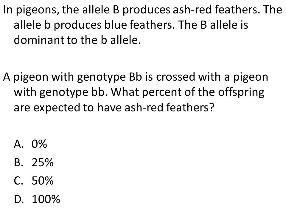 In pigeons, the allele B produces ash-red feathers