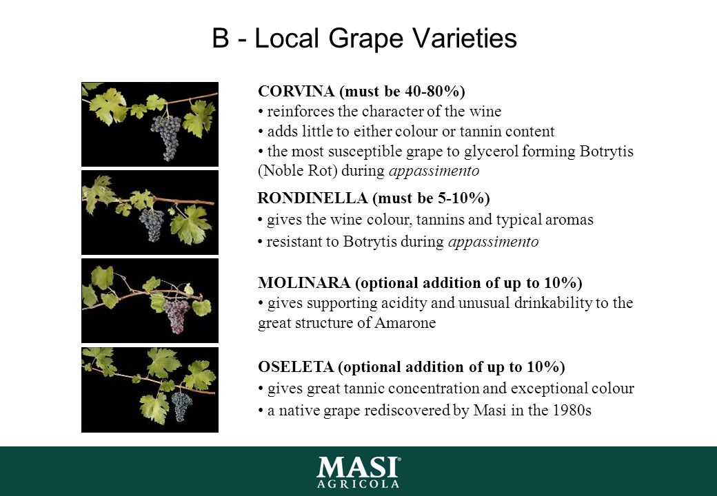 B - Local Grape Varieties