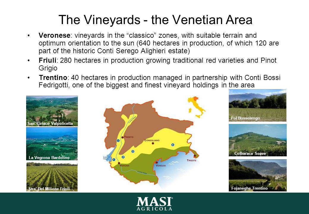 The Vineyards - the Venetian Area