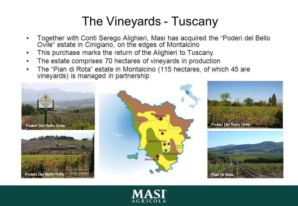 The Vineyards - Tuscany