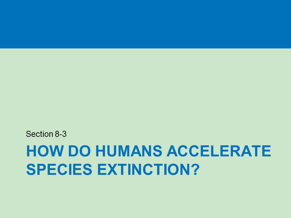 How do humans accelerate species extinction