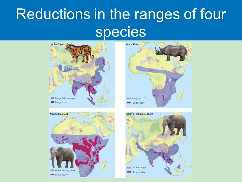 Reductions in the ranges of four species