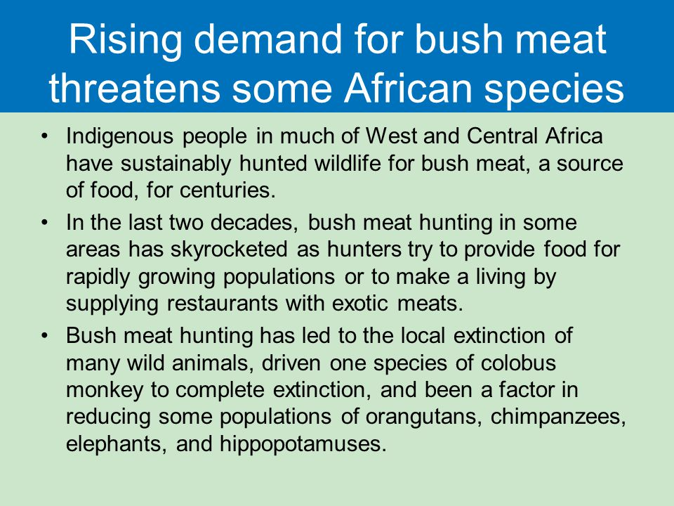 Rising demand for bush meat threatens some African species