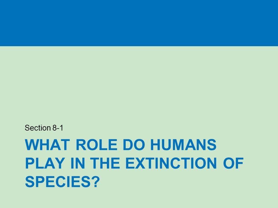 What role do humans play in the extinction of species