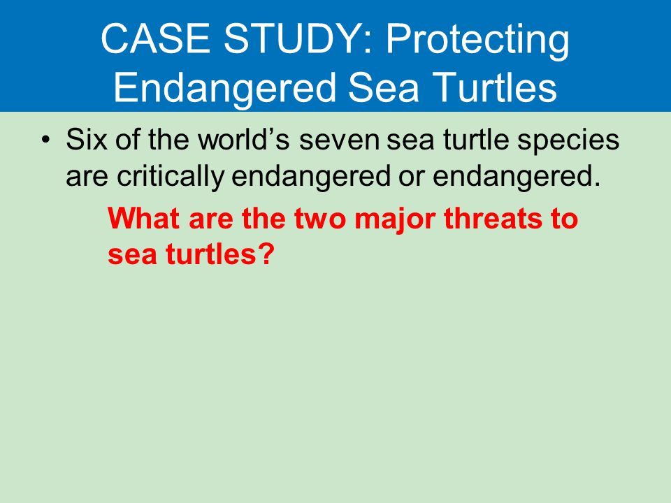 CASE STUDY: Protecting Endangered Sea Turtles
