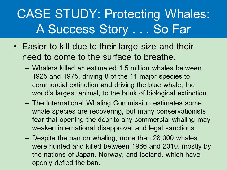 CASE STUDY: Protecting Whales: A Success Story . . . So Far