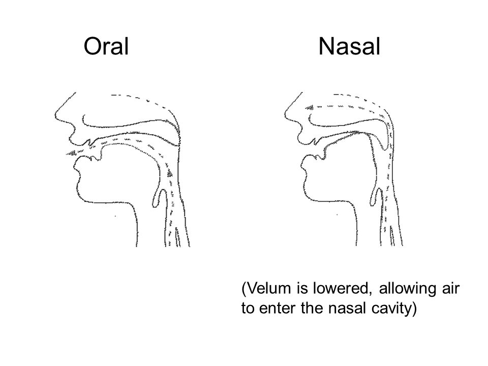 Oral Nasal (Velum is lowered, allowing air to enter the nasal cavity)