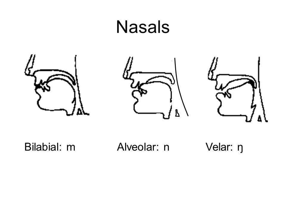 Nasals Bilabial: m Alveolar: n Velar: ŋ
