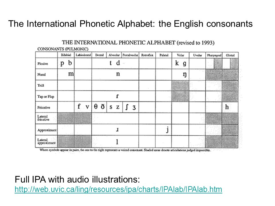 The International Phonetic Alphabet: the English consonants