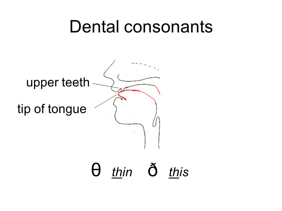 Dental consonants upper teeth tip of tongue θ thin ð this