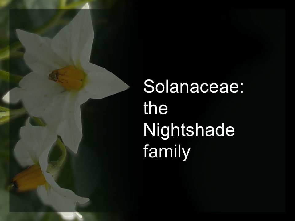 Solanaceae: the Nightshade family
