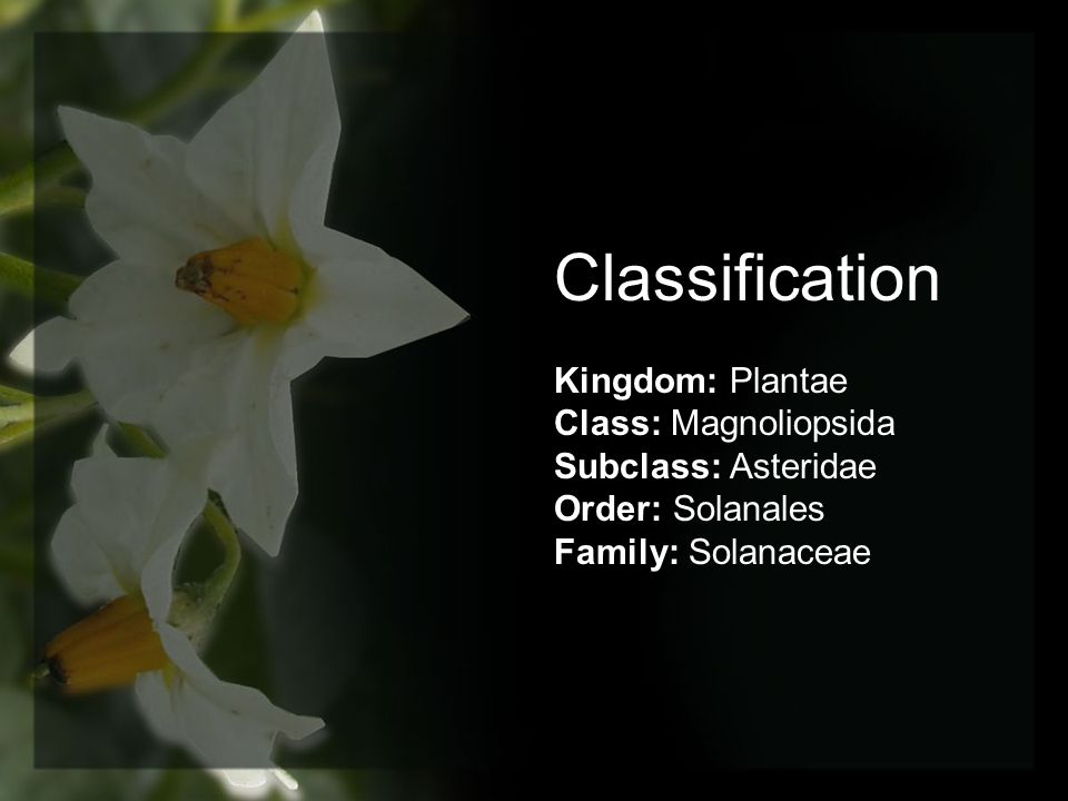 Classification Kingdom: Plantae Class: Magnoliopsida