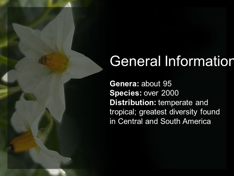 General Information Genera: about 95 Species: over 2000