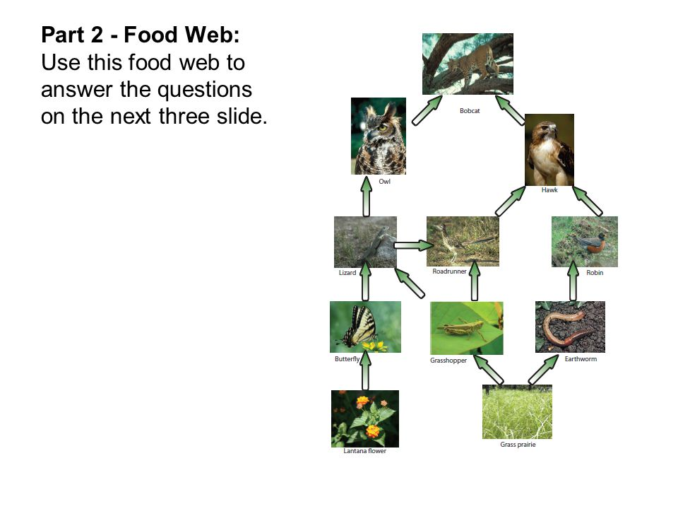 Part 2 - Food Web: Use this food web to answer the questions on the next three slide.