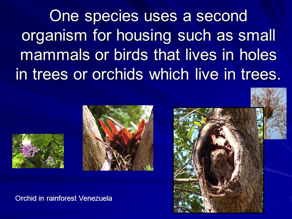 One species uses a second organism for housing such as small mammals or birds that lives in holes in trees or orchids which live in trees.