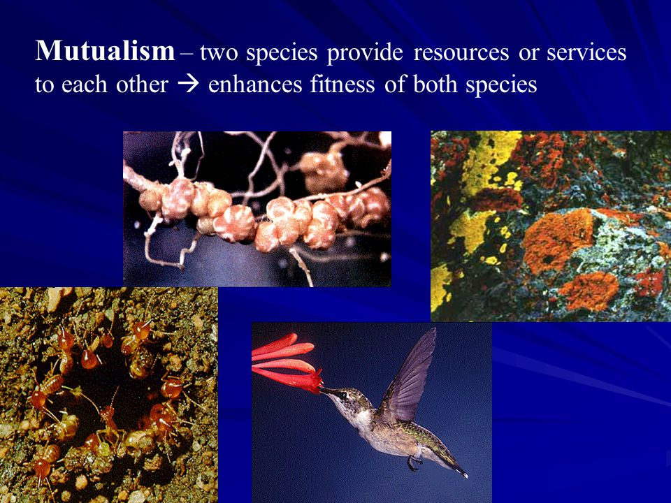 Mutualism – two species provide resources or services