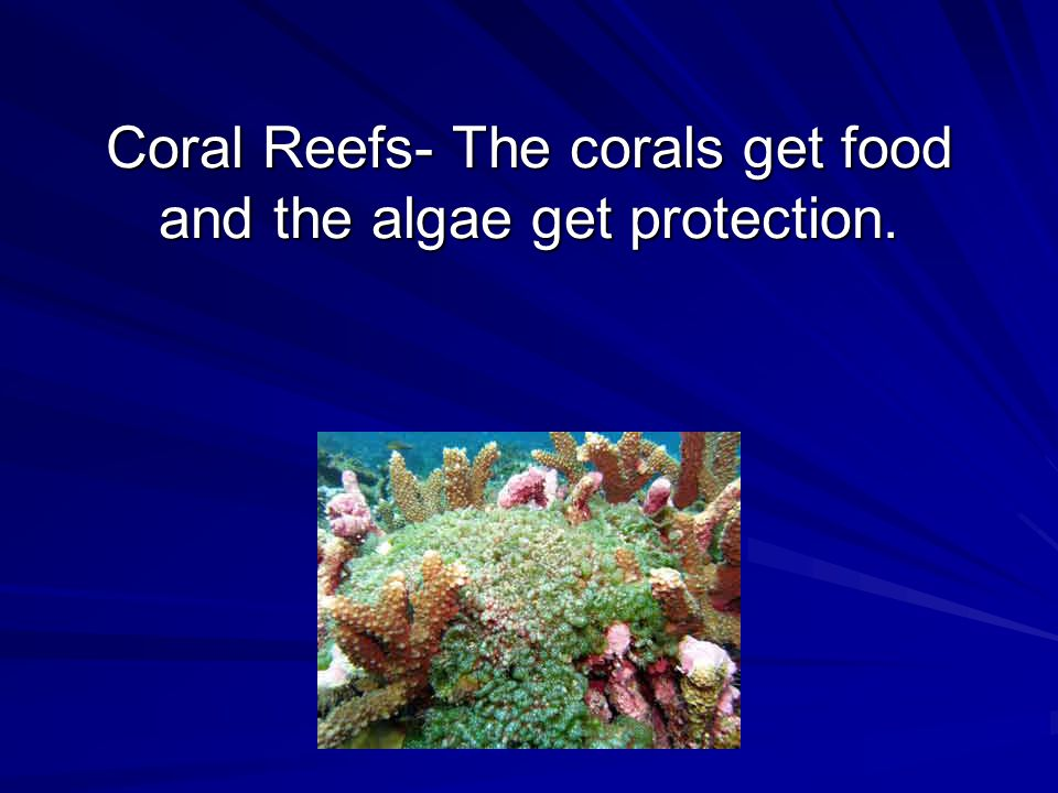 Coral Reefs- The corals get food and the algae get protection.