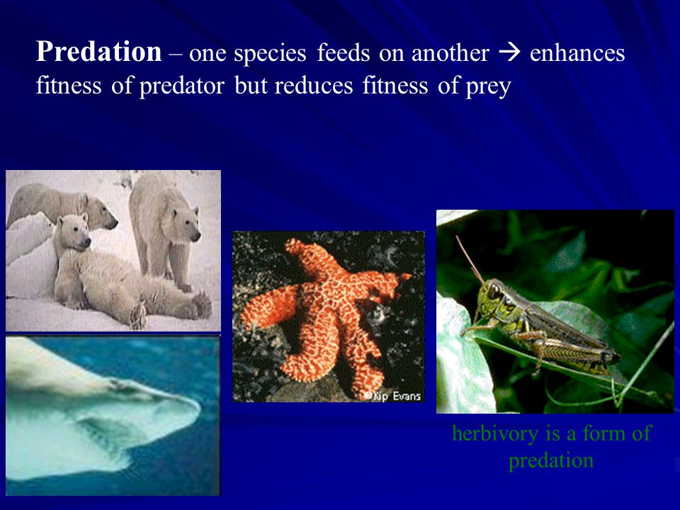 Predation – one species feeds on another  enhances
