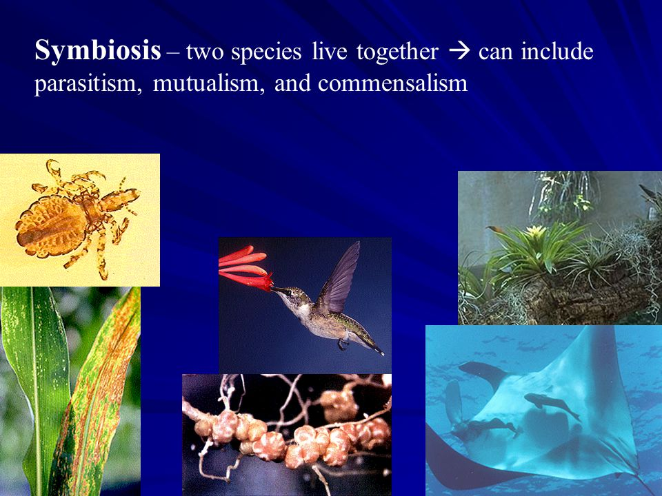 Symbiosis – two species live together  can include
