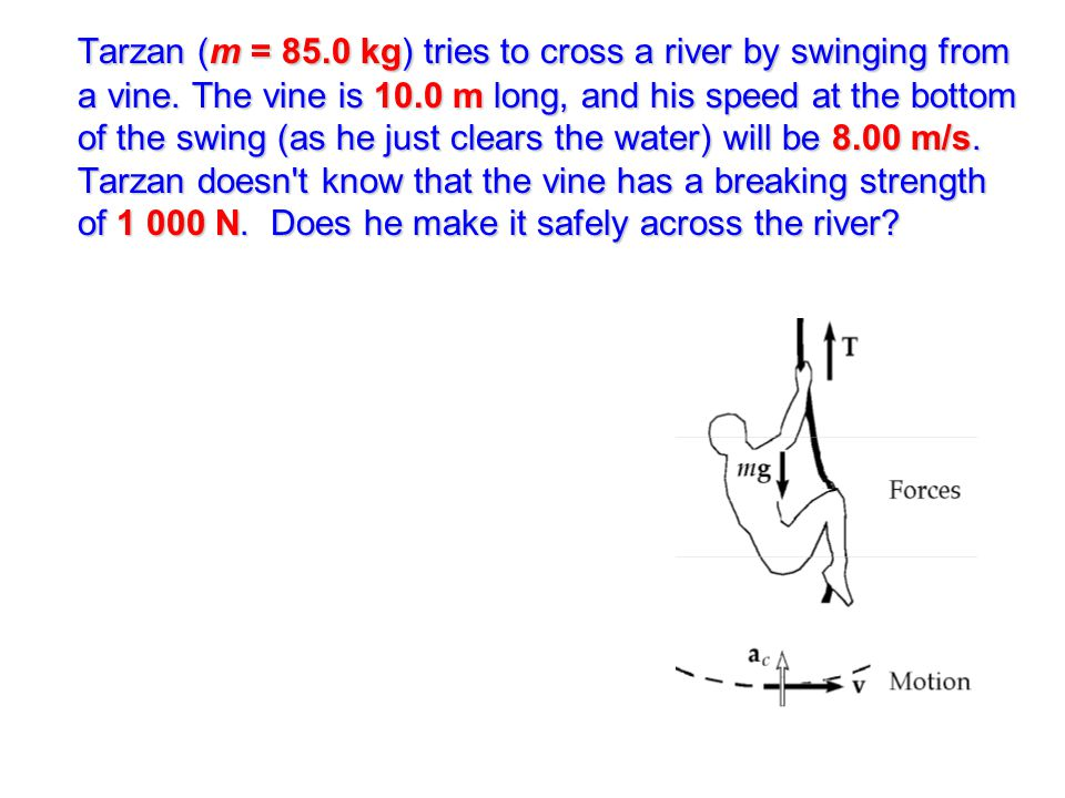 Tarzan (m = 85. 0 kg) tries to cross a river by swinging from a vine