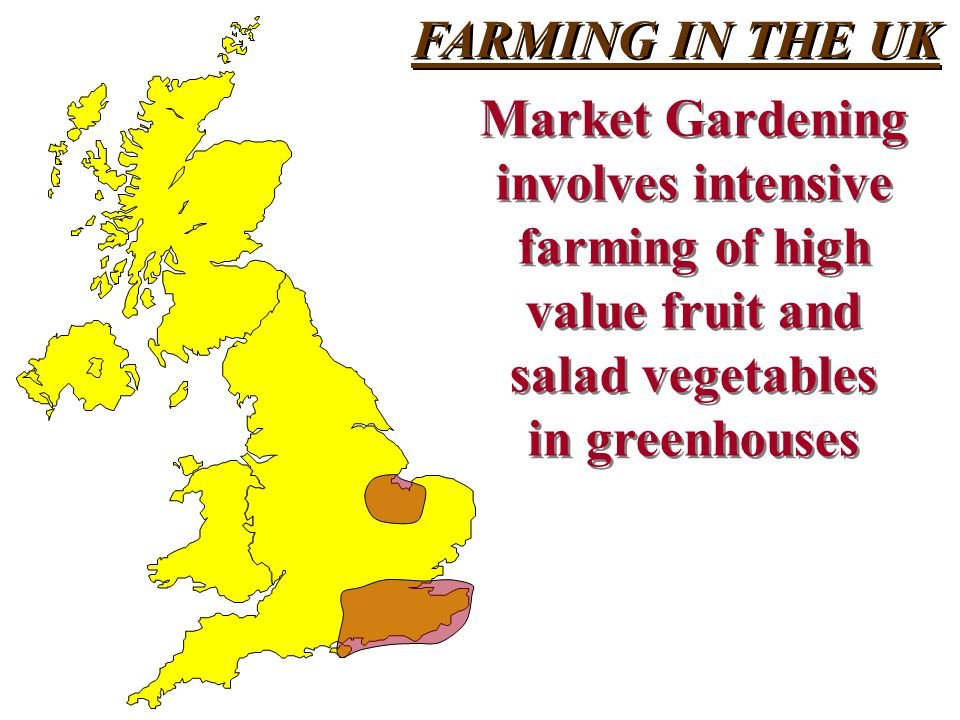 FARMING IN THE UK Market Gardening. involves intensive. farming of high. value fruit and. salad vegetables.