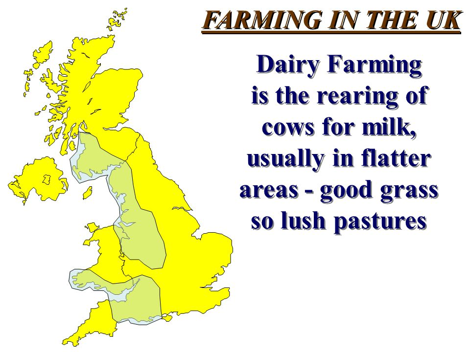 FARMING IN THE UK Dairy Farming. is the rearing of. cows for milk, usually in flatter. areas - good grass.