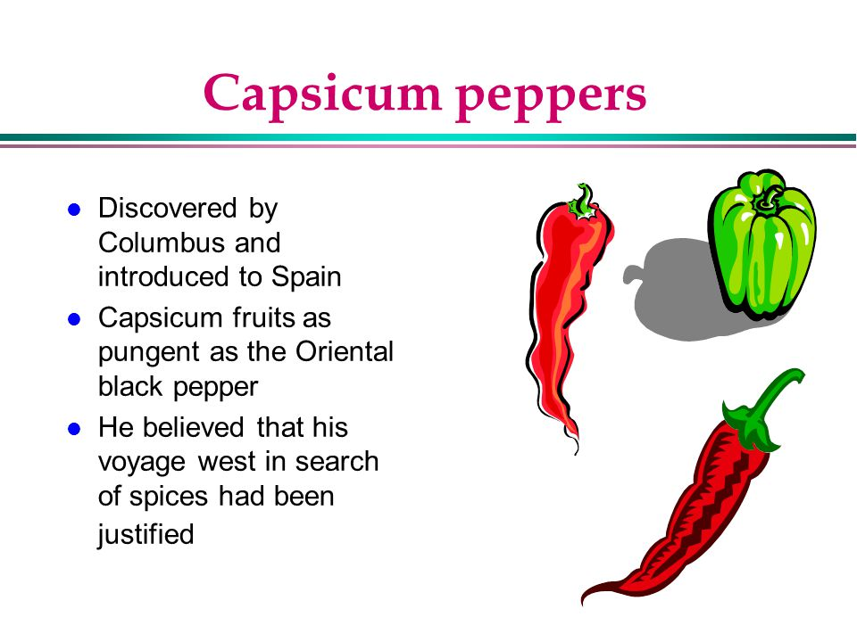 Capsicum peppers Discovered by Columbus and introduced to Spain