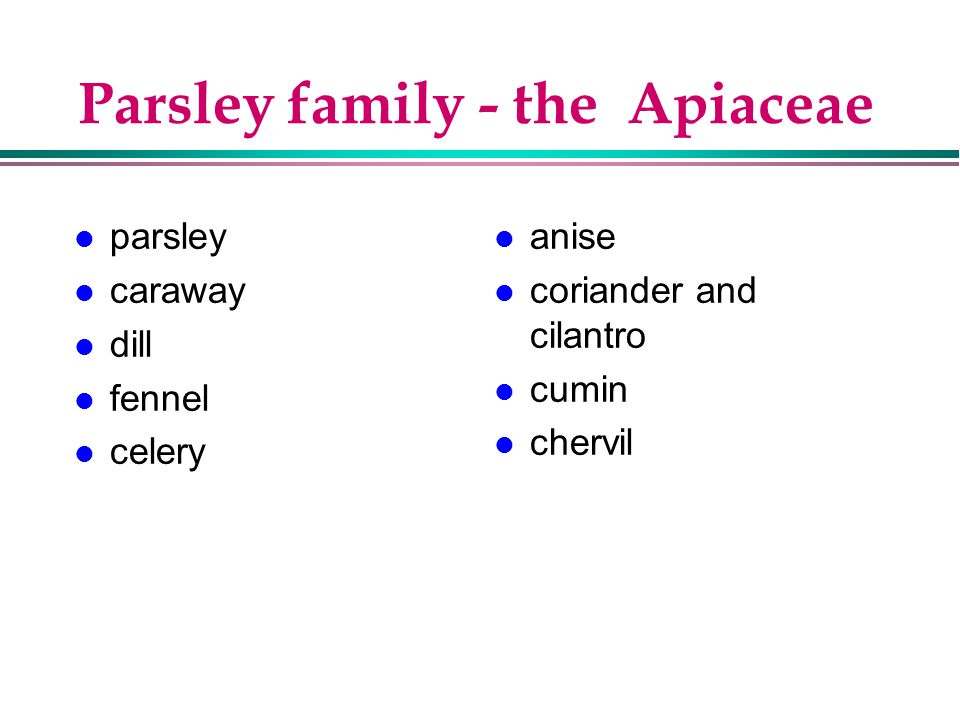 Parsley family - the Apiaceae