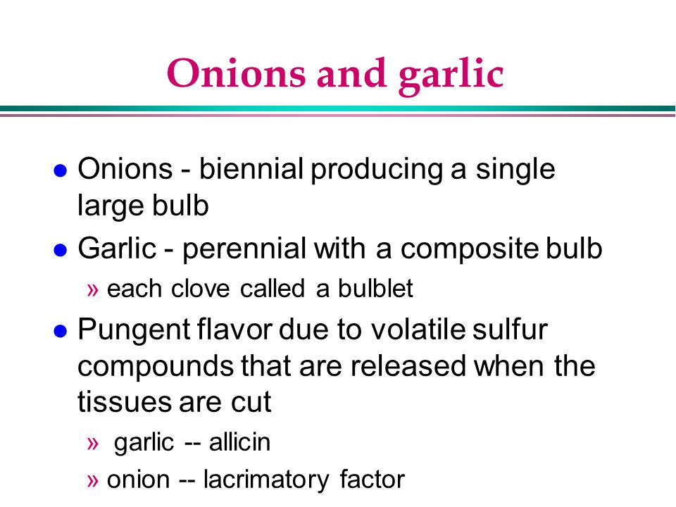 Onions and garlic Onions - biennial producing a single large bulb