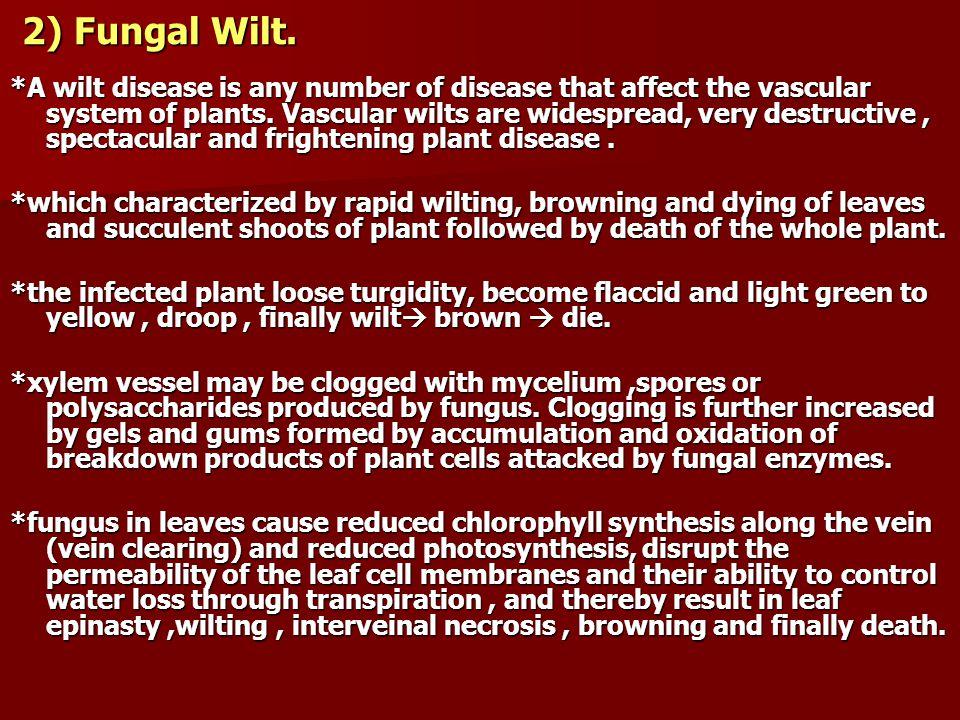 2) Fungal Wilt.