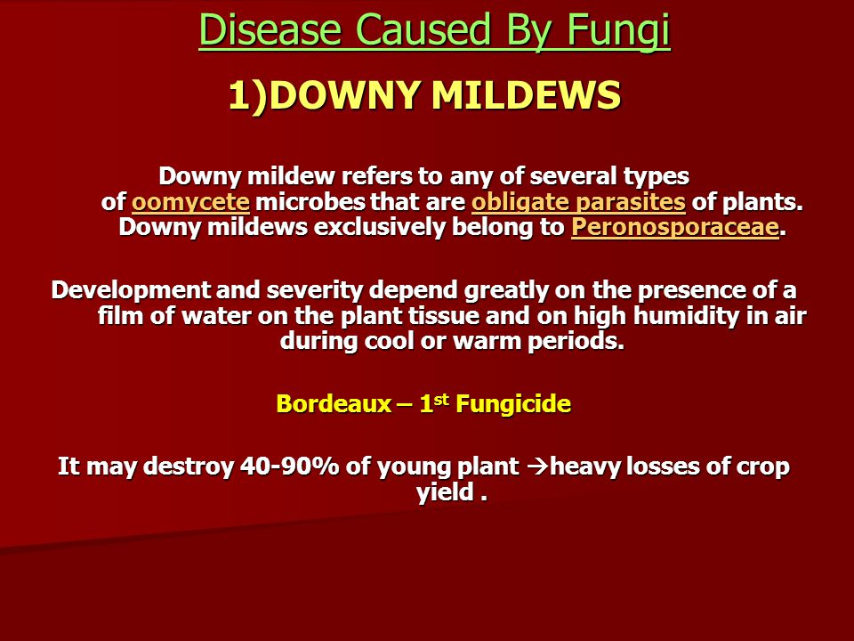 Disease Caused By Fungi