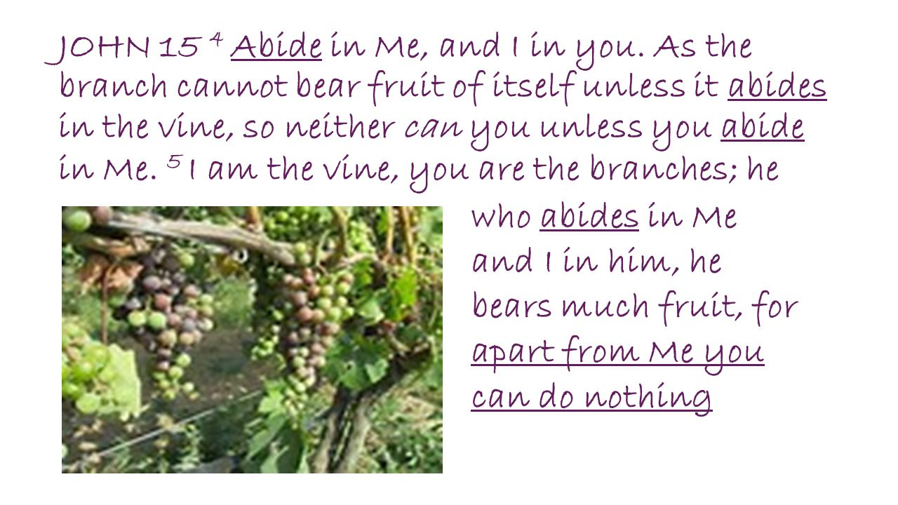 JOHN 15 4 Abide in Me, and I in you