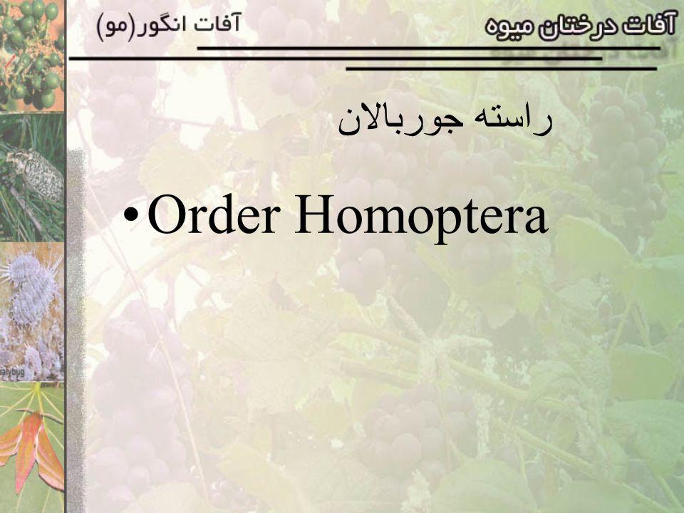 راسته جوربالان Order Homoptera