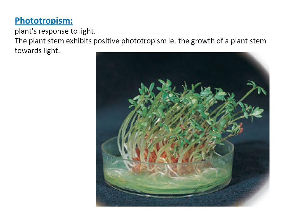Phototropism: plant s response to light.