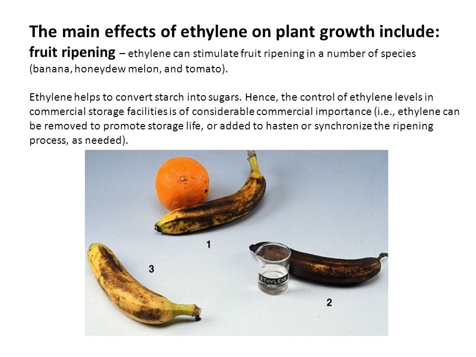 The main effects of ethylene on plant growth include: