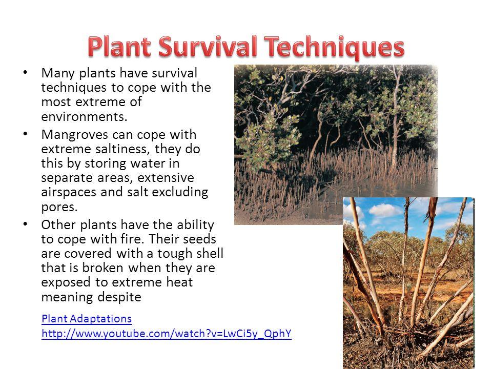 Plant Survival Techniques